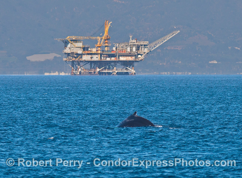Offshore oil and gas Platform Habitat and a humpback whale.