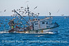 "Bottom trawler ""Washington"" and bird masses feeding on bycatch."