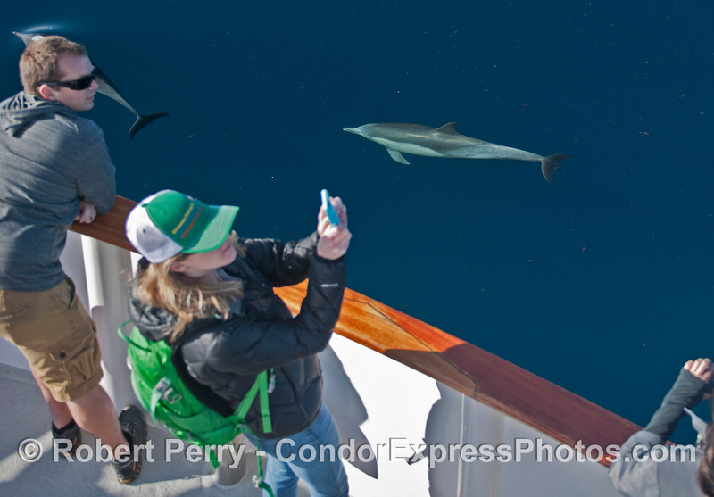 Photographers enjoy ideal conditions for capturing dolphins.