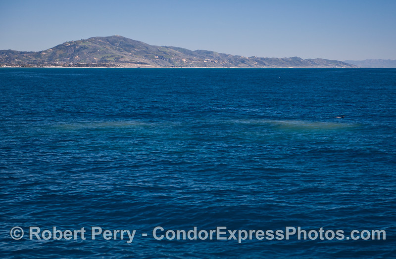 Two isolated green plankton spots.