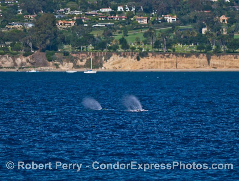 Two spouts and the Santa Barbara coastline in back.