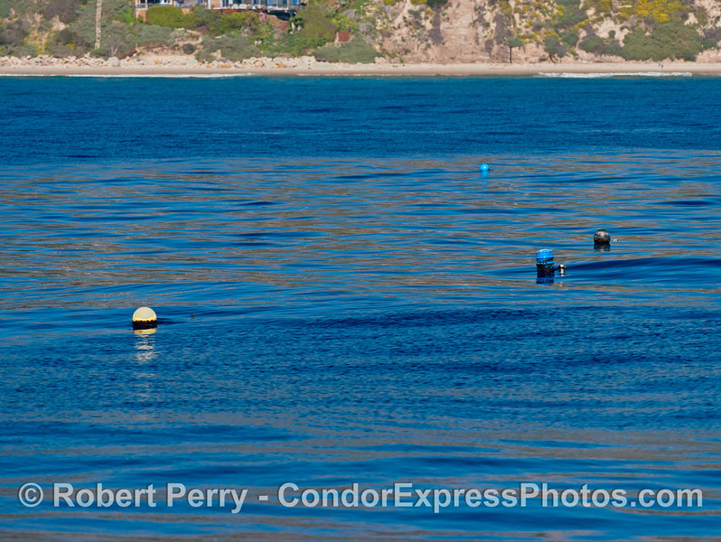 Image 1 of 2:  Surface floats marking and oyster farm.   Santa Barbara Mariculture company.