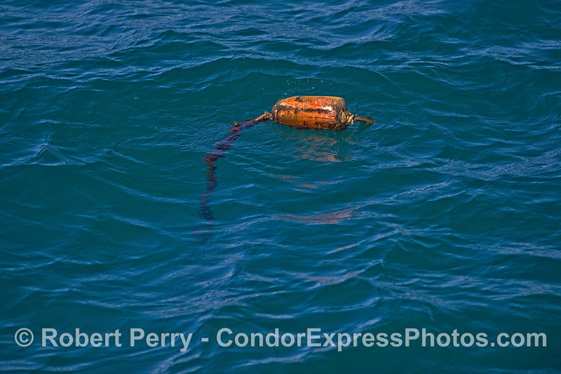 Lobster trap marker float.