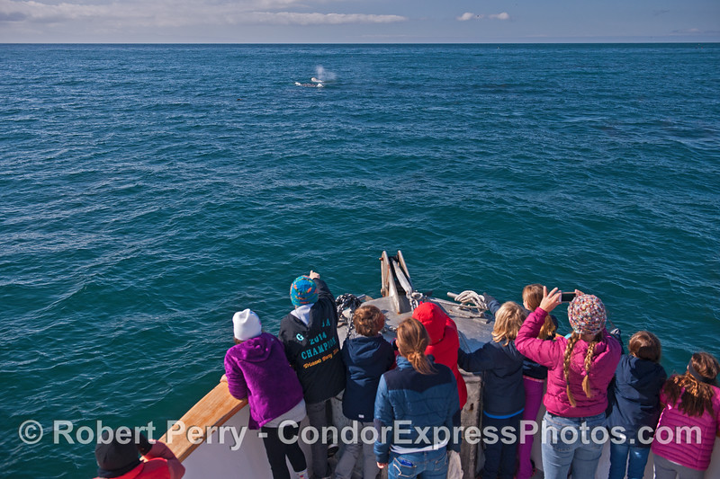 Third grade students spot two gray whales off the bow.