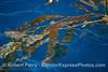 Macrocystis pyrifera on surface 2015 03-03 SB Coast-009
