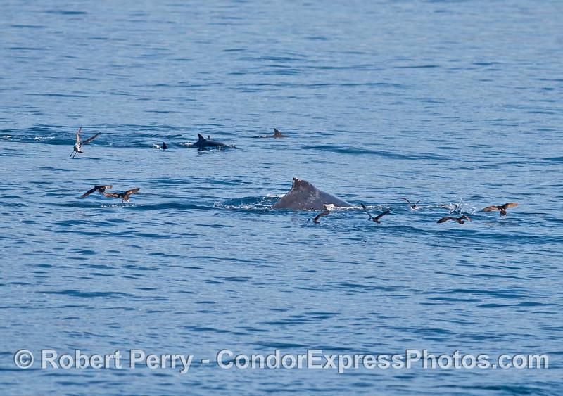 Humpback, dolphins, sea birds.