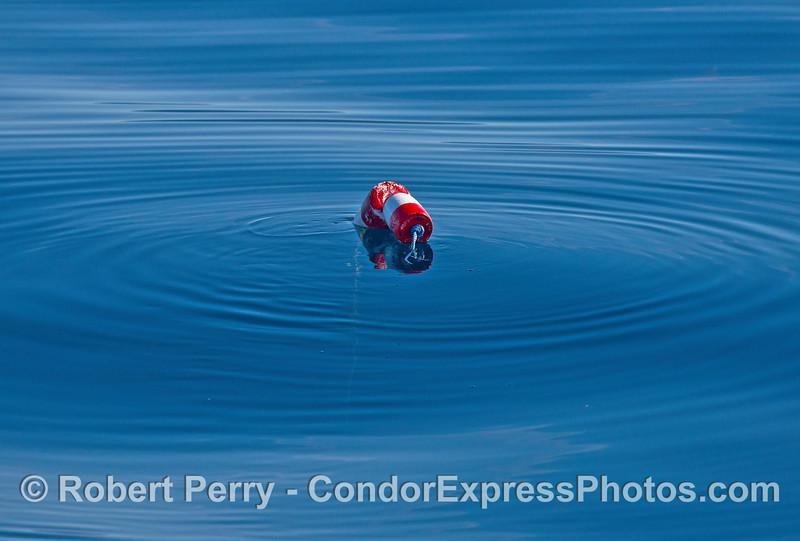 Lobster trap float.