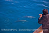 Photographer captures friendly common dolphins with iPhone.
