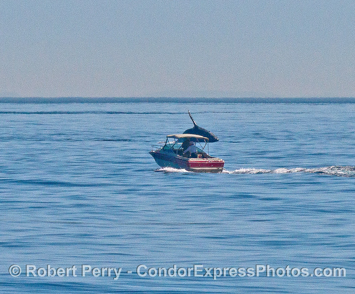 Image 3 of 4:   Image your surprise. You were noodling along in your runabout on a beautiful day in the Santa Barbara Channel. Out of no where, a monster gray whale gets airborne and breaches right in front of your boat. No time for a selfie, so no one will believe your tale.