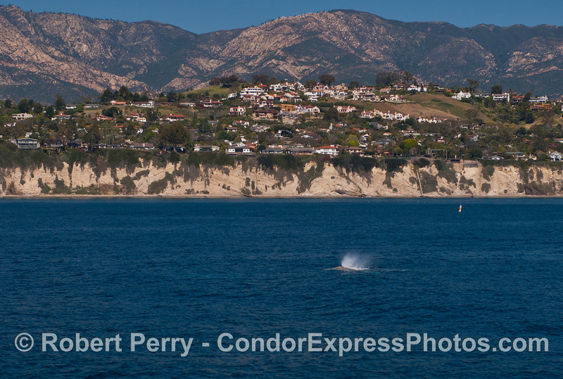 Santa Barbara:  the Mesa - with great view of northbound gray whales.