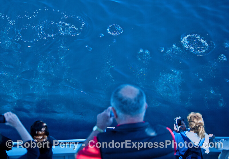 Image 1 of 2:  a bubble curtain rises to the surface next to the boat from a humpback whale