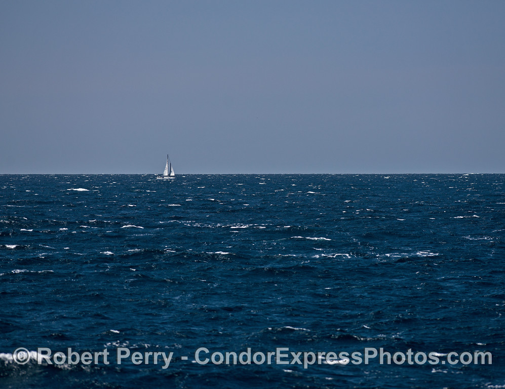 Lone sails on a breezy ocean