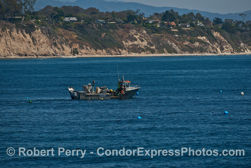"The fishing vessel ""Perserverance"" harvests ocean-cultured mussels near Hope Ranch"