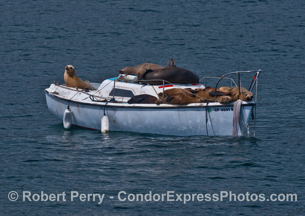 California sea lions find a nice place in the sun to relax