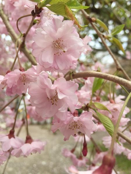 2015-04-12 Narita Layover