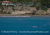 Two gray whale calves, one of their mothers, an SUP'r and homes on the bluff.