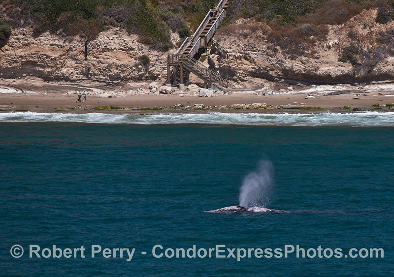The famous 1,000 steps, a mother human pushes a baby stroller, and a coastal northbound gray whale on a sunny day.