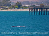 Gray whale off Goleta Pier.