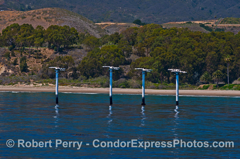 Ellwood cormorant nesting posts.