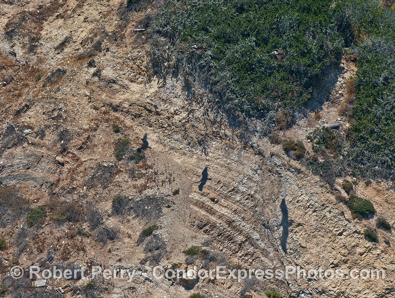 Three brown pelican shadows on the cliff face.  The birds are up higher soaring near the vegetation.