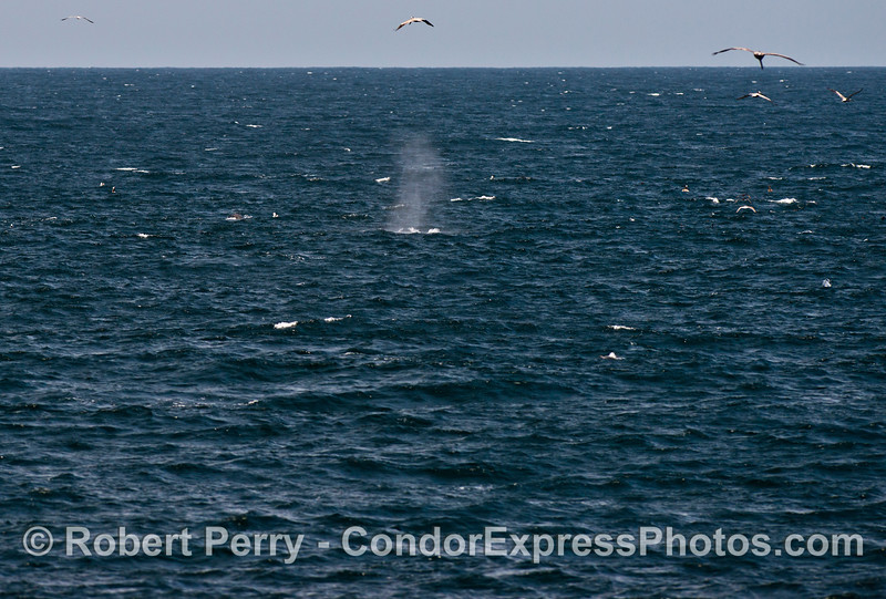A moderate breeze and the tall spout of a humpback whale