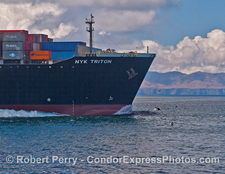 If you click and enlarge this photograph you will see a humpback whale kicking up its tail flukes very close to the bow of this container cargo ship