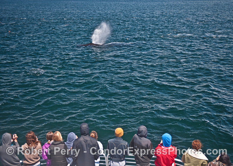 Whale watchers get a great look at a friendly humpback whale