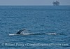 Humpback whale tail and an offshore oil platform in back