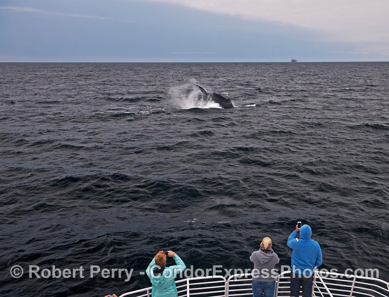 Whale fans get a close lool at a tail-throwing humpback whale