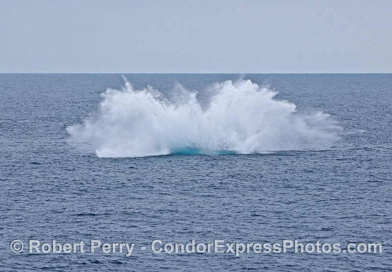 Image 3 of 3 in a row:   a humpback whale breaching sequence. The big splashdown.