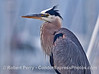 A great blue heron poses for a portrait, perched on top of the wheelhouse of a neighboring boat in the harbor