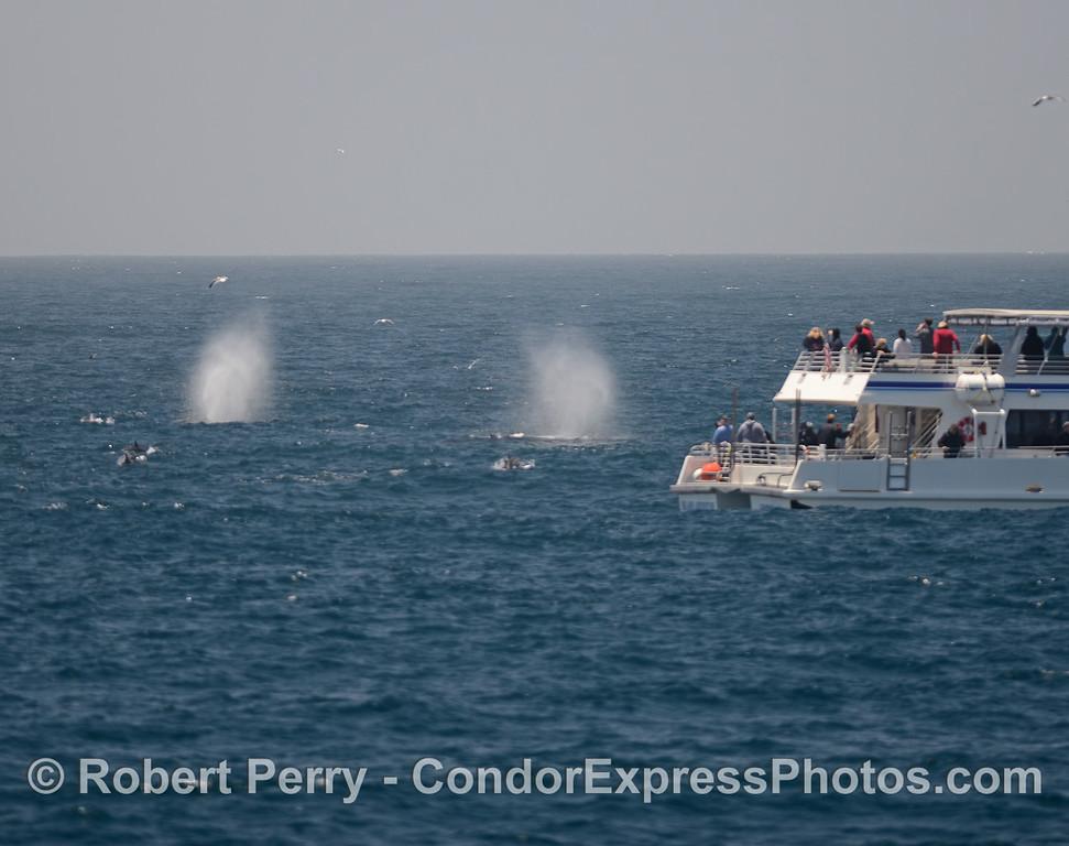 Two tall humpback spouts near a boat