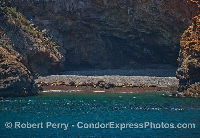 A warm sunny cove lined with resting California sea lions.