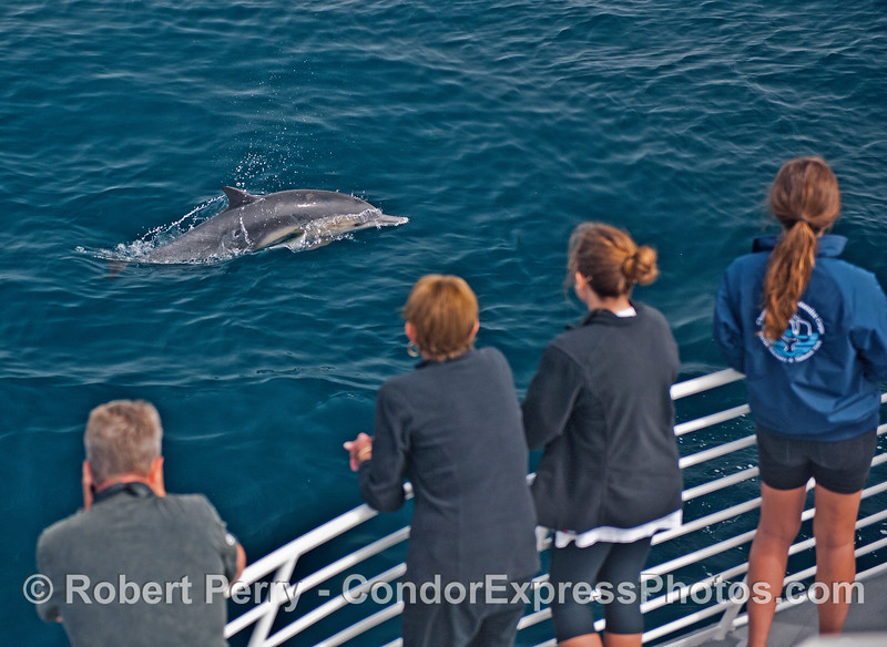 Best wild dolphin viewing anywhere