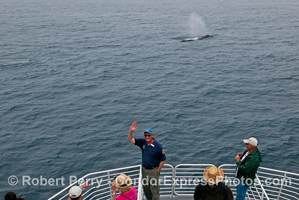 Naturalist Marty gets a whale selfie.   Hi, Marty !