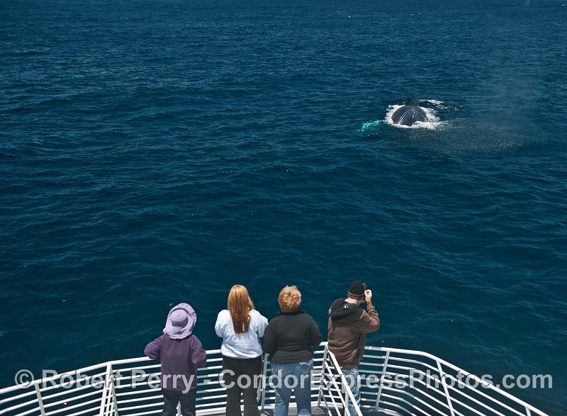 Humpback fans enjoy the view