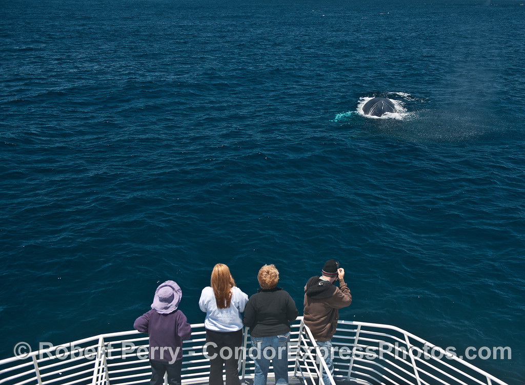 Humpback fans enjoy the view