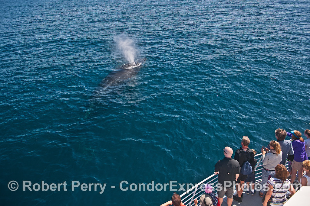 Whale fans get a close look at a friendly humpback