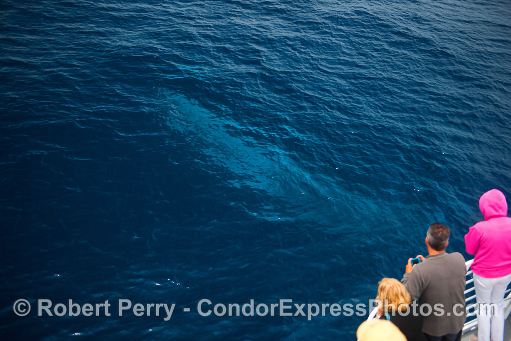 The blue glow from a fin whale passing directly under the Condor Express