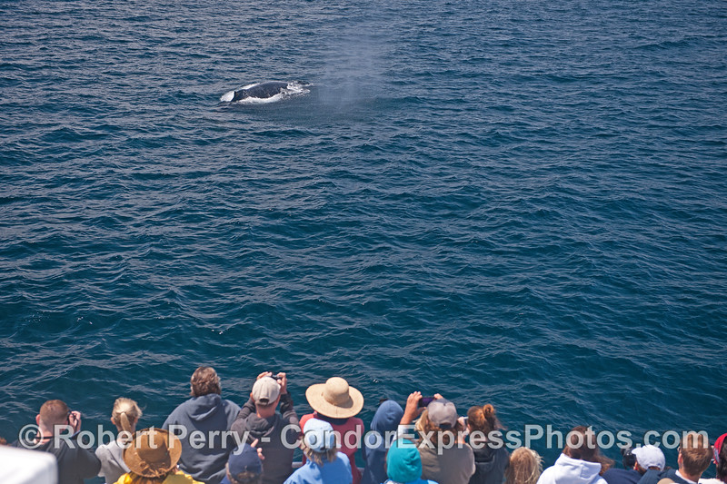Whale fans get a special close up visit from a humpback whale.