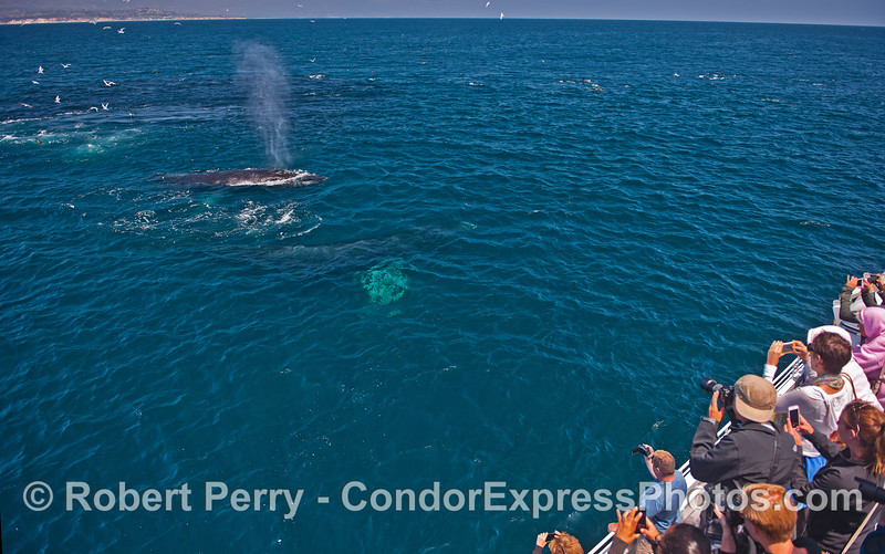 Two whales come by for some selfies.