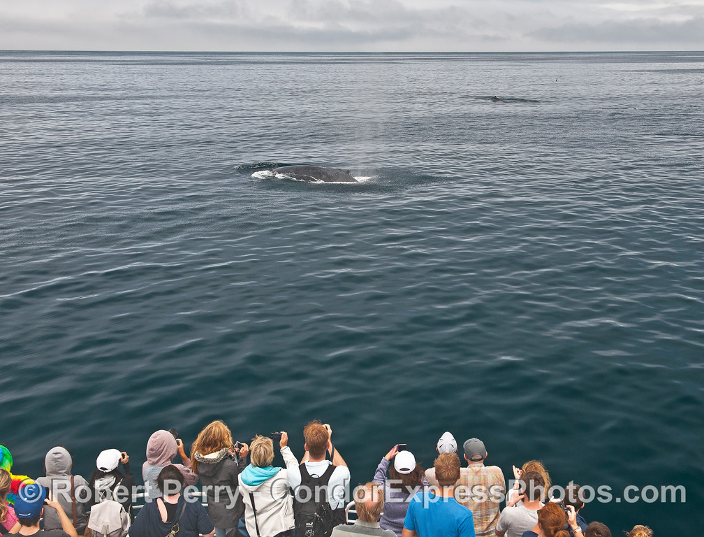 Whale fans and their friendly humpbacks.