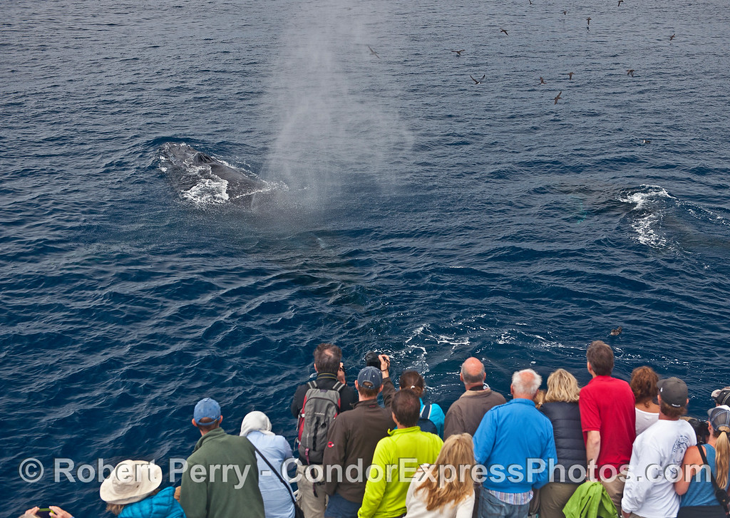 Two whales close to their fans.