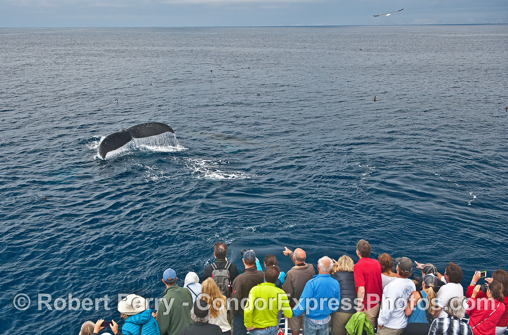 Tail flukes of a humpback with lots of whale fans close by.