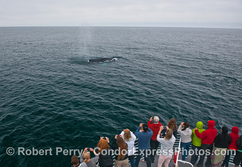 A friendly humpback whale and its fan club.