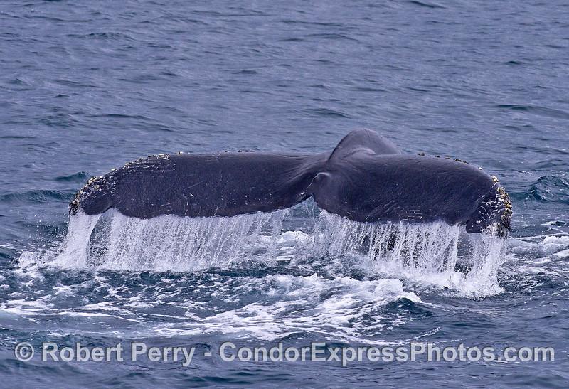 Humpback whale tail waterfall.