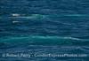 A pair of blue streaks
