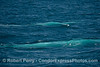 Two blue streaks - a pair of blue giants under the surface