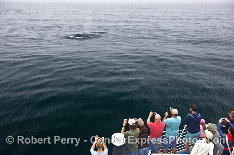 Photographers enjoy a humpback whale on a glassy ocean.