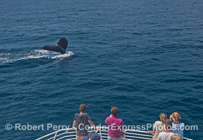 Surprisingly few whale fans were on the bow to see this friendly humpback